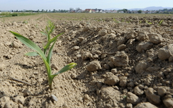 Частные фермеры поднимут сельхоз отрасль страны