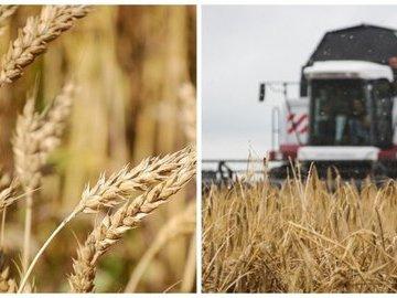 Василий Голубев: Ростовская область стоит на страже продовольственной безопасности страны
