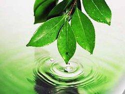Тамбовская область призвала федеральные власти спасти региональную экологию